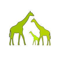 Giraffe family by Ipso Imago