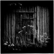 Barn Flowers by Andrew Kaufman