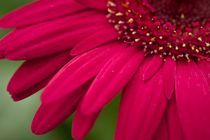 red flower details von Mike Griggs