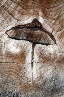 wooden-mushroom-0067A by Dennis Tarnay Jr