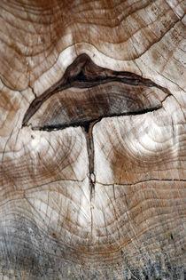 wooden-mushroom-0067v2 by Dennis Tarnay Jr