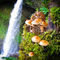 Silver-falls-and-shrooms