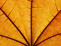 Leaf Close-up 004 by Thom Gourley