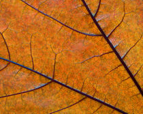 Leaf Close-up 033 by Thom Gourley