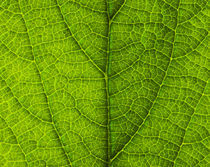 Leaf Close-up 063 by Thom Gourley
