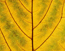Leaf Close-up 192 by Thom Gourley