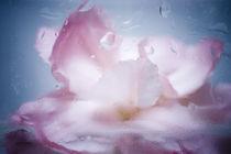 inner flower by Anna Rise