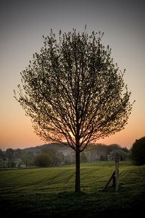 Morgenstimmung am Vogelsberg XI von Thomas Schaefer
