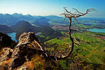 the tree on the Bavaria Landscape von Pedro Liborio