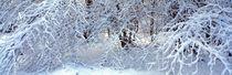 Schneebedeckter Winterwald von Intensivelight Panorama-Edition