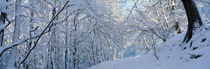 Waldweg im Winter 3 by Intensivelight Panorama-Edition
