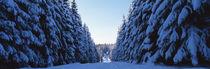 Waldweg im Winter 2 by Intensivelight Panorama-Edition
