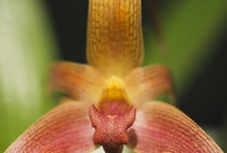 Close-up Colorful Orchid by Melissa Salter
