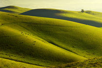 Rolling Hills by Richard Susanto