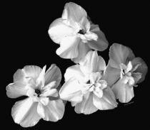 White-on-black