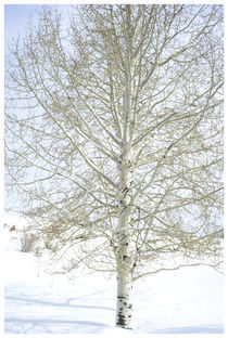 Winter Tree (Utah#11) von Bryony Shearmur