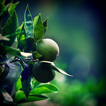 citrus plants by Ekaterina Karmanovskaya