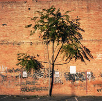 Urban Tree by Peter Calvin