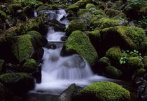 Olympic National Park, Creek with mossy Rocks von Wolfgang Kaehler