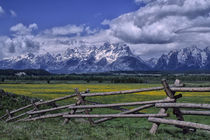 Grand Teton Mountains with Dandelions and Fence by Wolfgang Kaehler