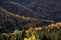 Fall Colors in Quebec von Wolfgang Kaehler