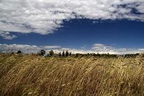 Wheat von Alessandro Caniglia
