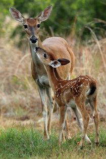 Deer-mom
