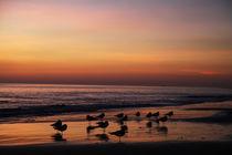 Californias-crystal-cove-beach-at-sunset