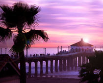 California-manhattan-beach-palm-and-sun