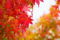 Autumn leaves by Oksana Islamova