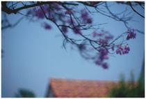Purple Blossom by Bryony Shearmur