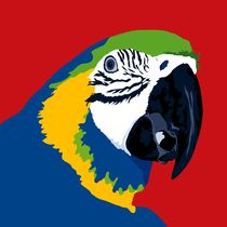 Blue and yellow macaw by sebastiano ranchetti