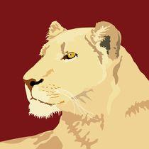 Lioness by sebastiano ranchetti