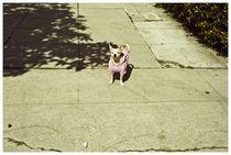 I Love LA. #6 von Bryony Shearmur