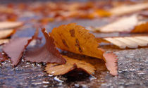 Autumn leaves in the street von Radu Razvan