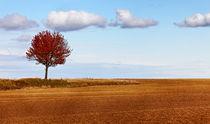 Autumn solitude by Radu Razvan