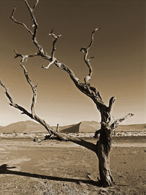 desolate environment von james smit