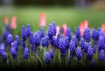 Blumen violett, rot  von Bea  Gaberthüel