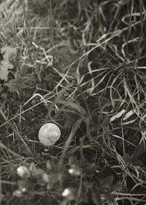 Forest still-life by Arseny Sigarev