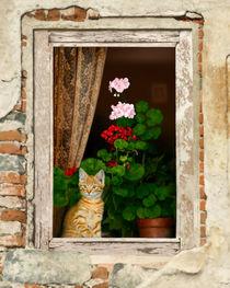 Little Tuscan Tiger von Bob Nolin