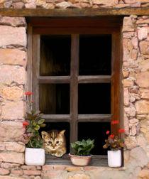 Tuscan-kitten-in-a-window-20x24