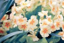 spring flower by Margo Khalys