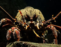 Crayfish by james smit