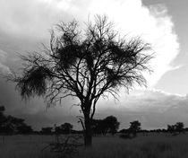 tree by james smit