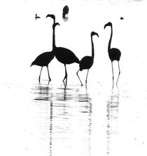 flamingoes namibia von james smit
