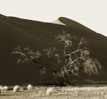 namibian desert by james smit