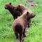 Bush-dogs-sq-img-7242