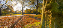 London, Hyde Park in Autumn by Alan Copson