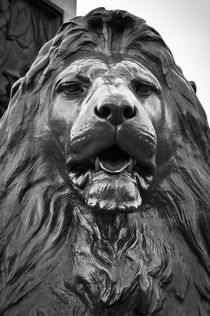 London, Trafalgar Square, Nelson's Column, Lions by Edwin Landseer by Alan Copson