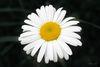 Beautiful-flower